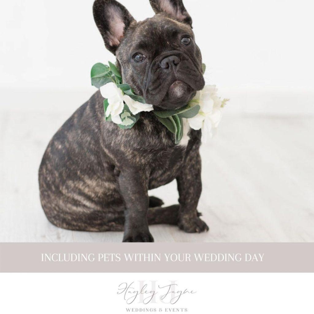 French Bulldog With Flower collar