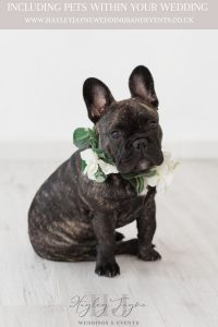 French Bulldog with flower collar at a wedding